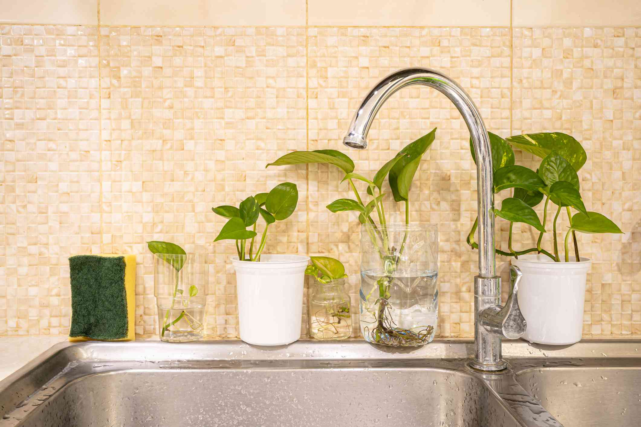 Kitchen sink decorated with plants