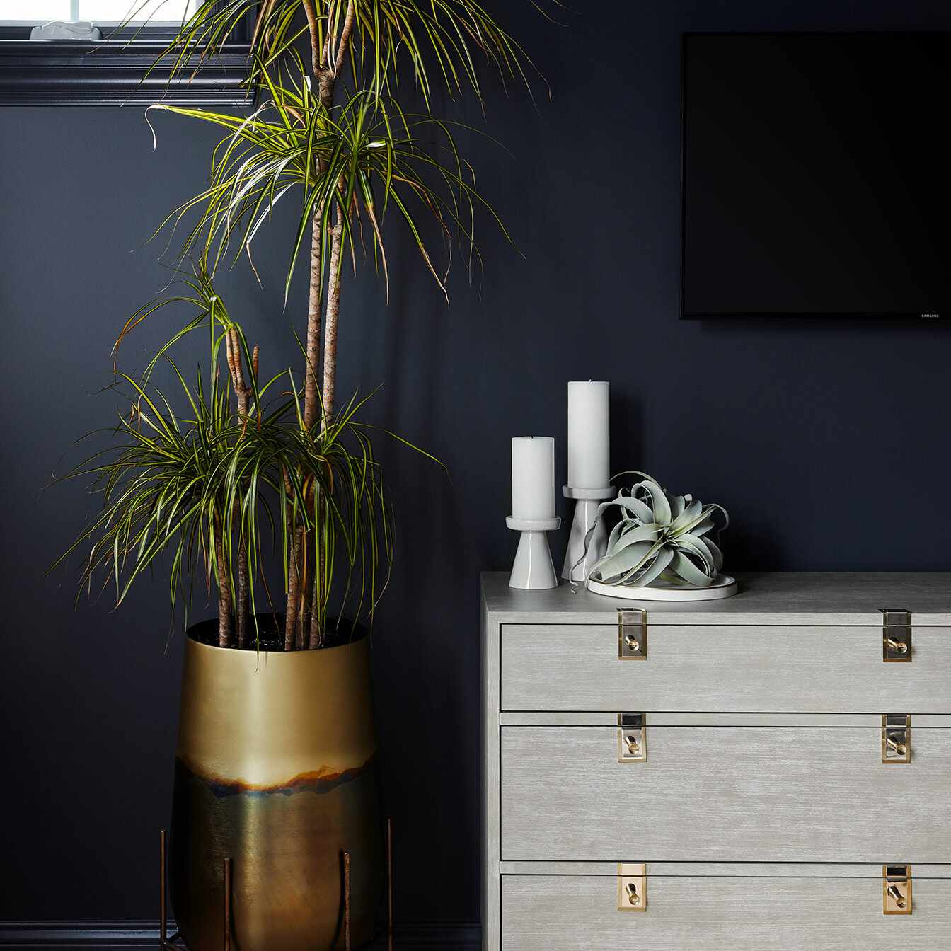 Navy wall with tropical plants