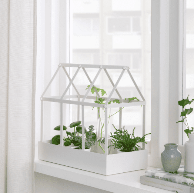 SENAPSKÅL Decoration greenhouse with plants.