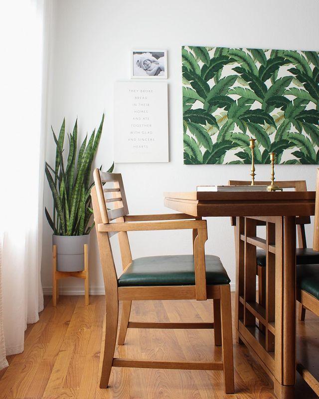Snake plant in a modern dining room corner