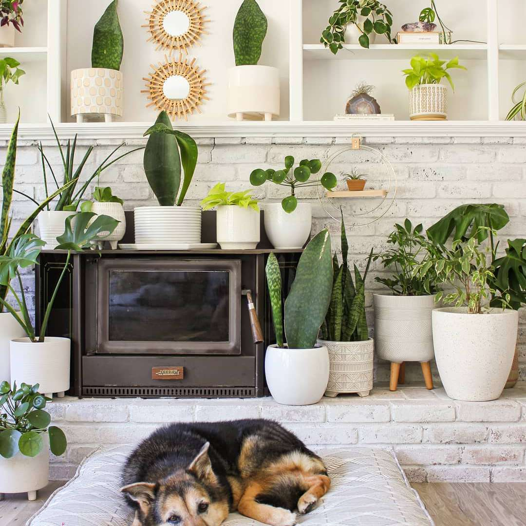 Whale fine plants on a hearth