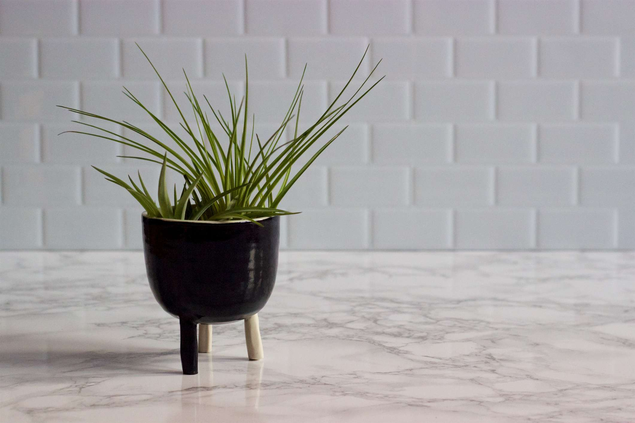 An air plant on a kitchen countertop
