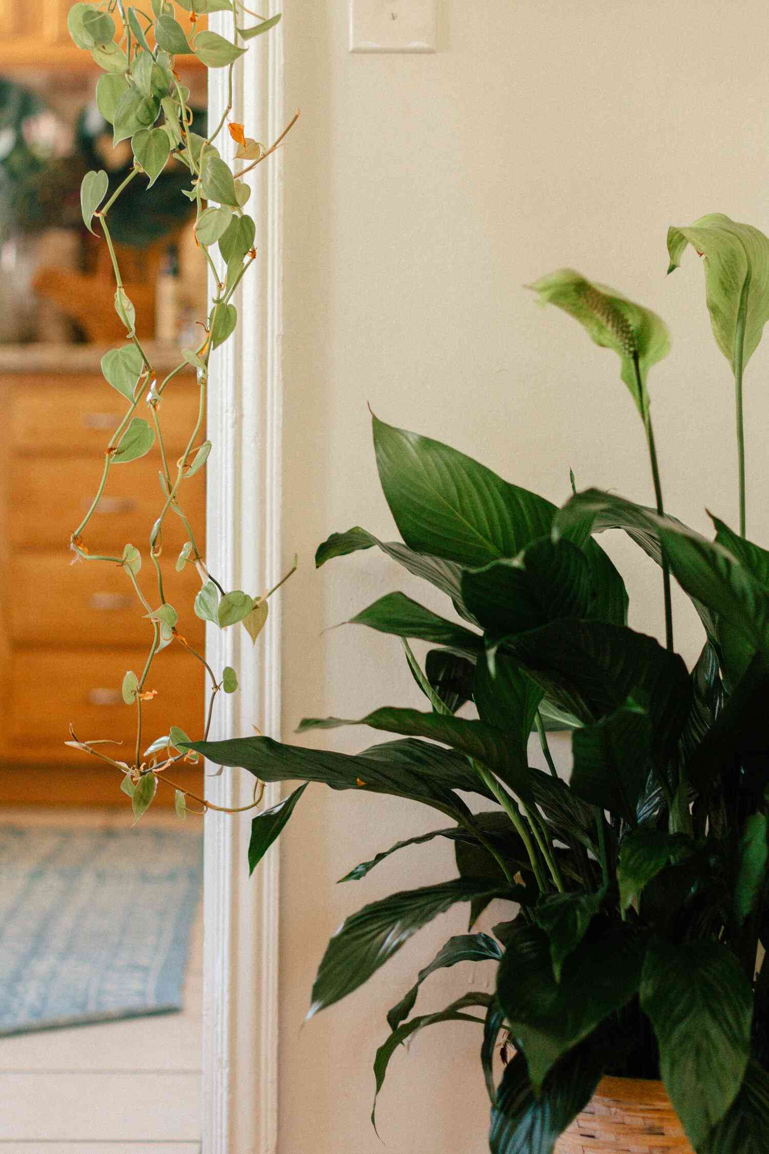Peace lily next to a doorway