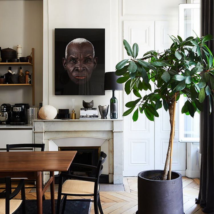 A midcentury modern dining area with a large potted rubber tree.