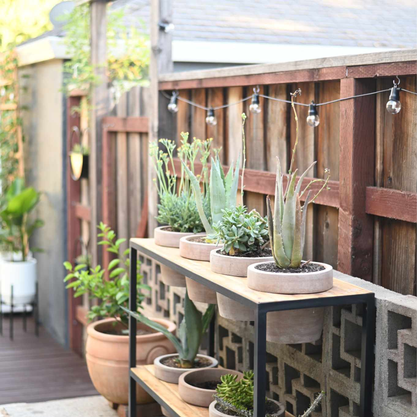 Small planters lined up in a wooden bed.