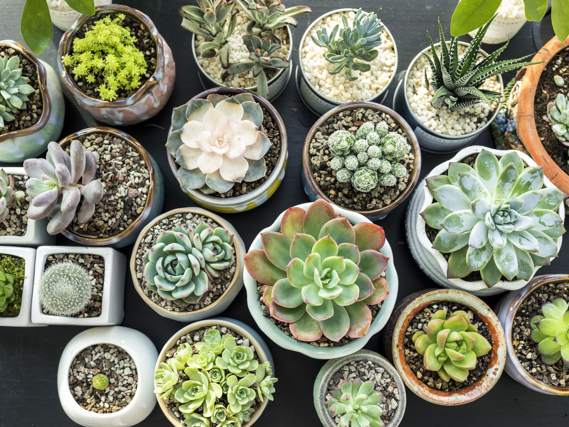 How To Propagate Succulents And Grow Your Indoor Garden