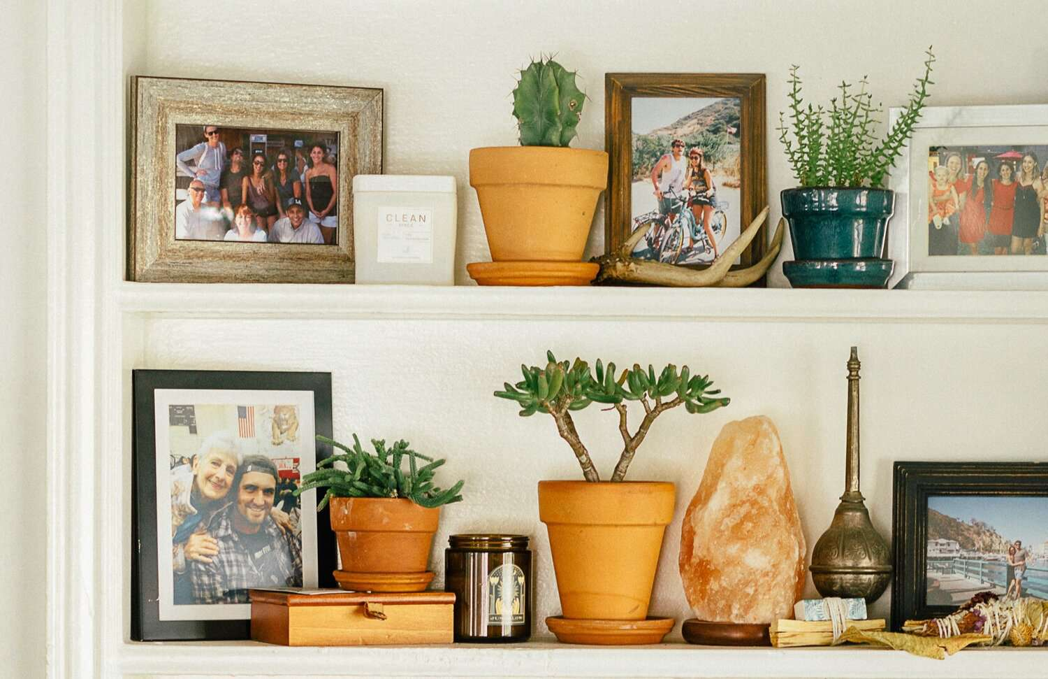 Jade and assorted succulents on a styled shelf