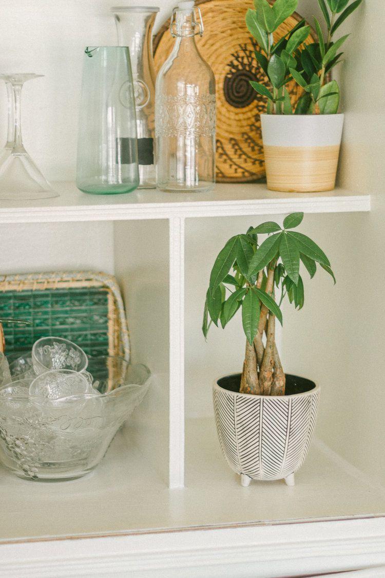 Money tree on a styled shelf