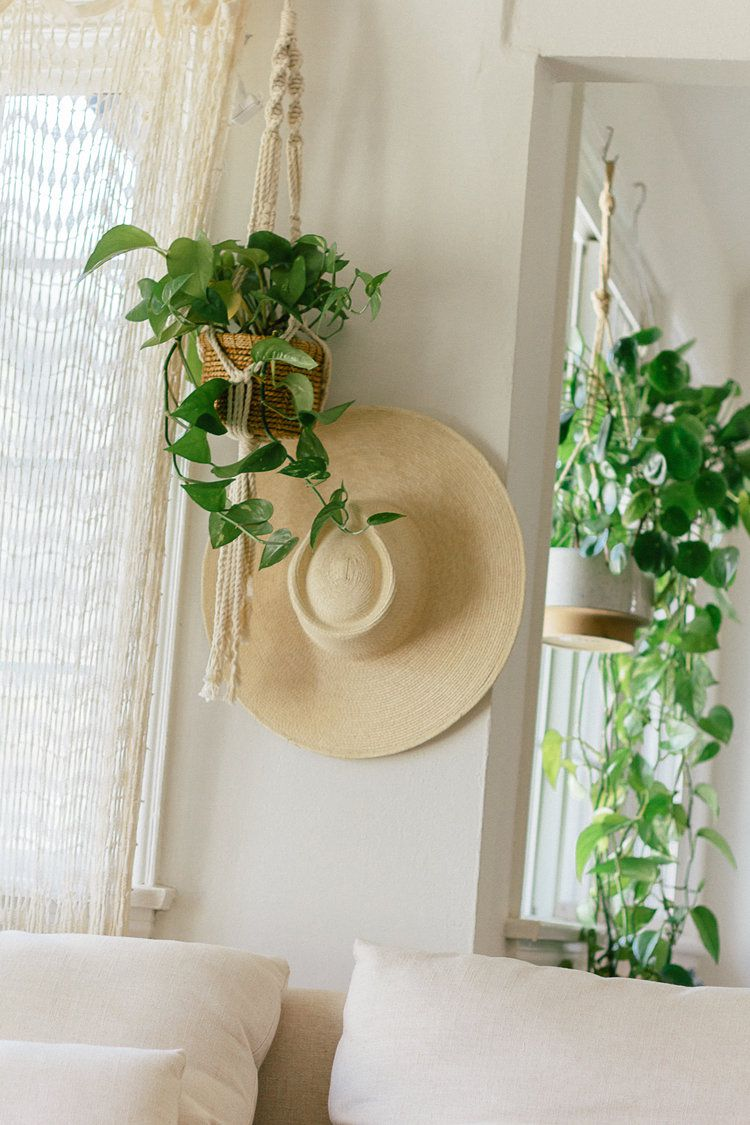 Hanging pothos in a bright room