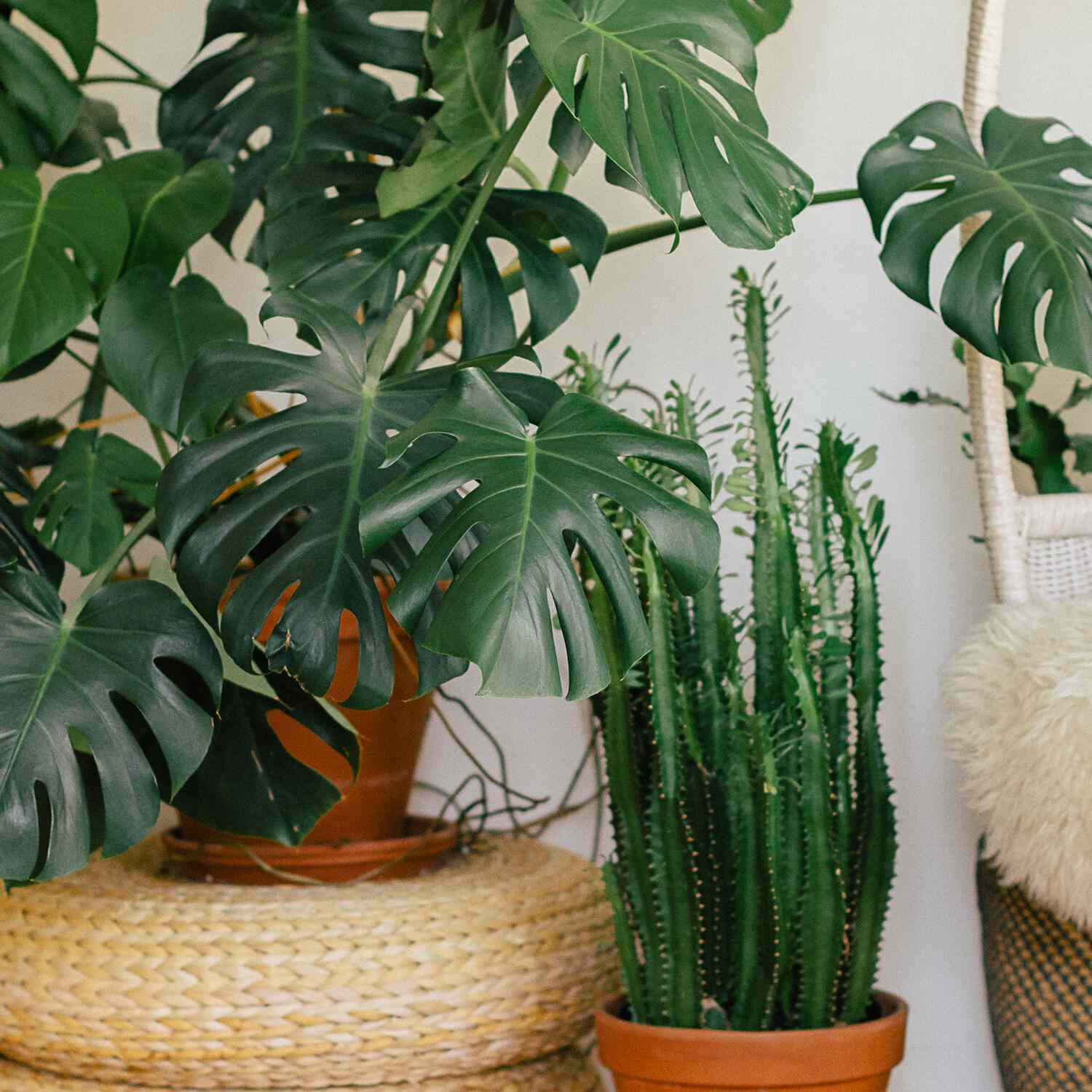 The 15 Best Plants For Bedrooms To Help You Sleep Better