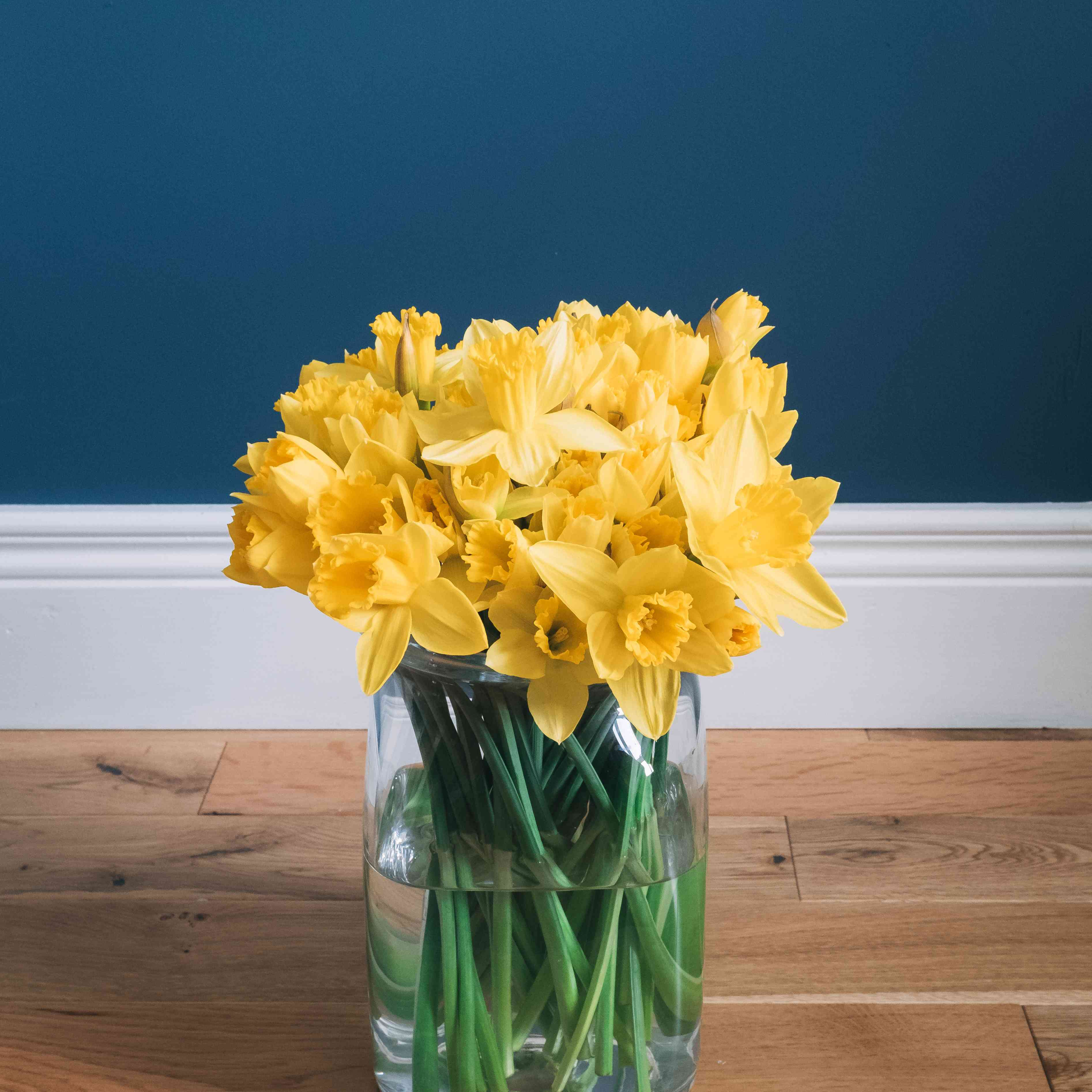 daffodils birth month flowers