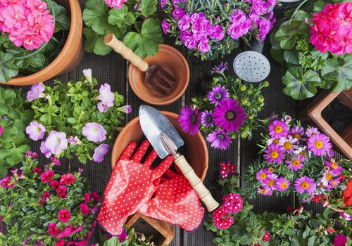 flowering plants, pots, and gardening gloves and tools on table