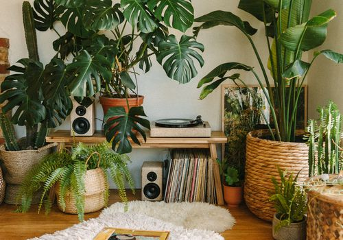 living area filled with plants and boho details