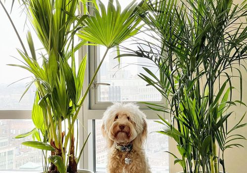 Bamboo Palm with Dog