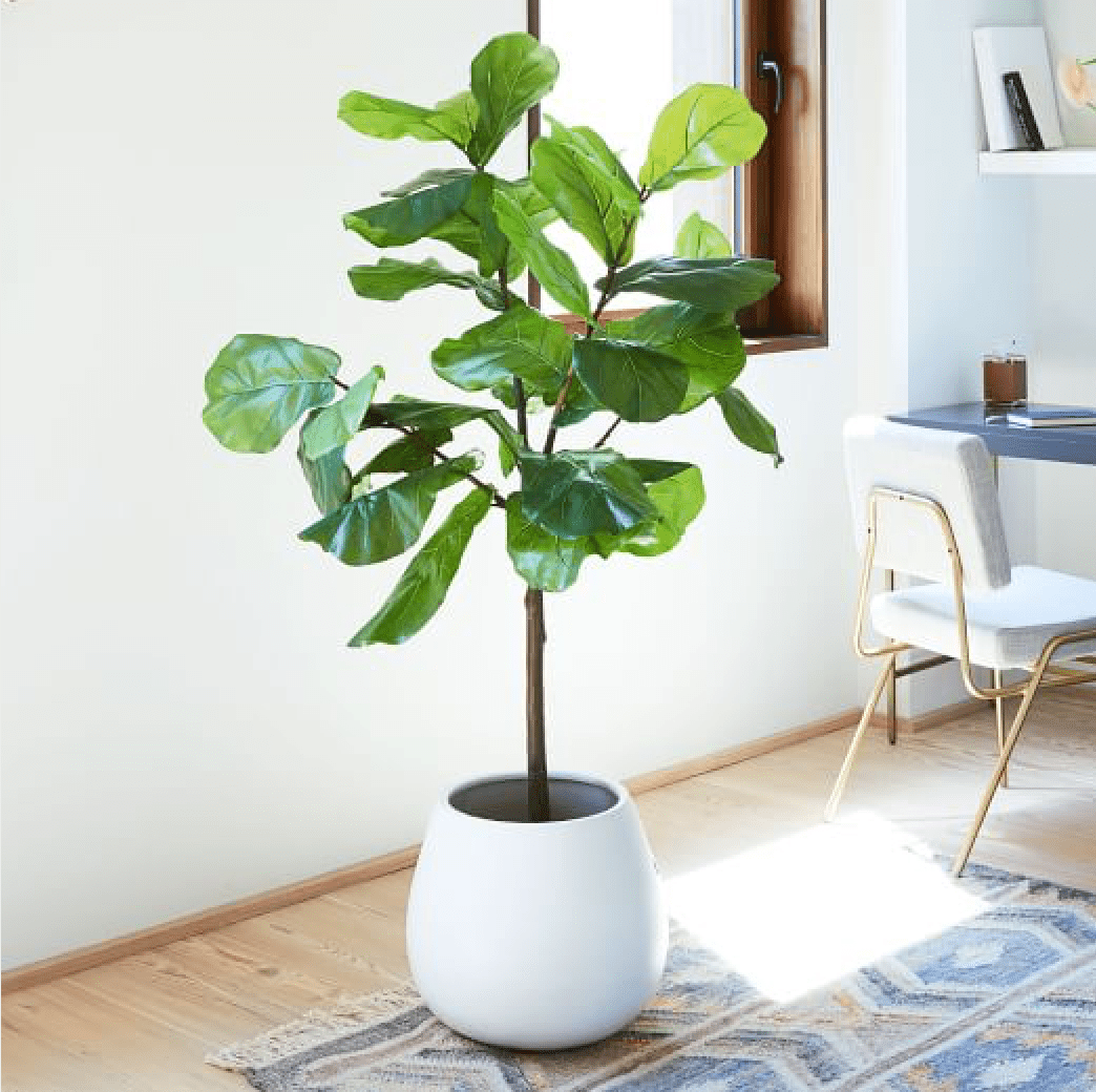 west elm faux fiddle leaf fig plant