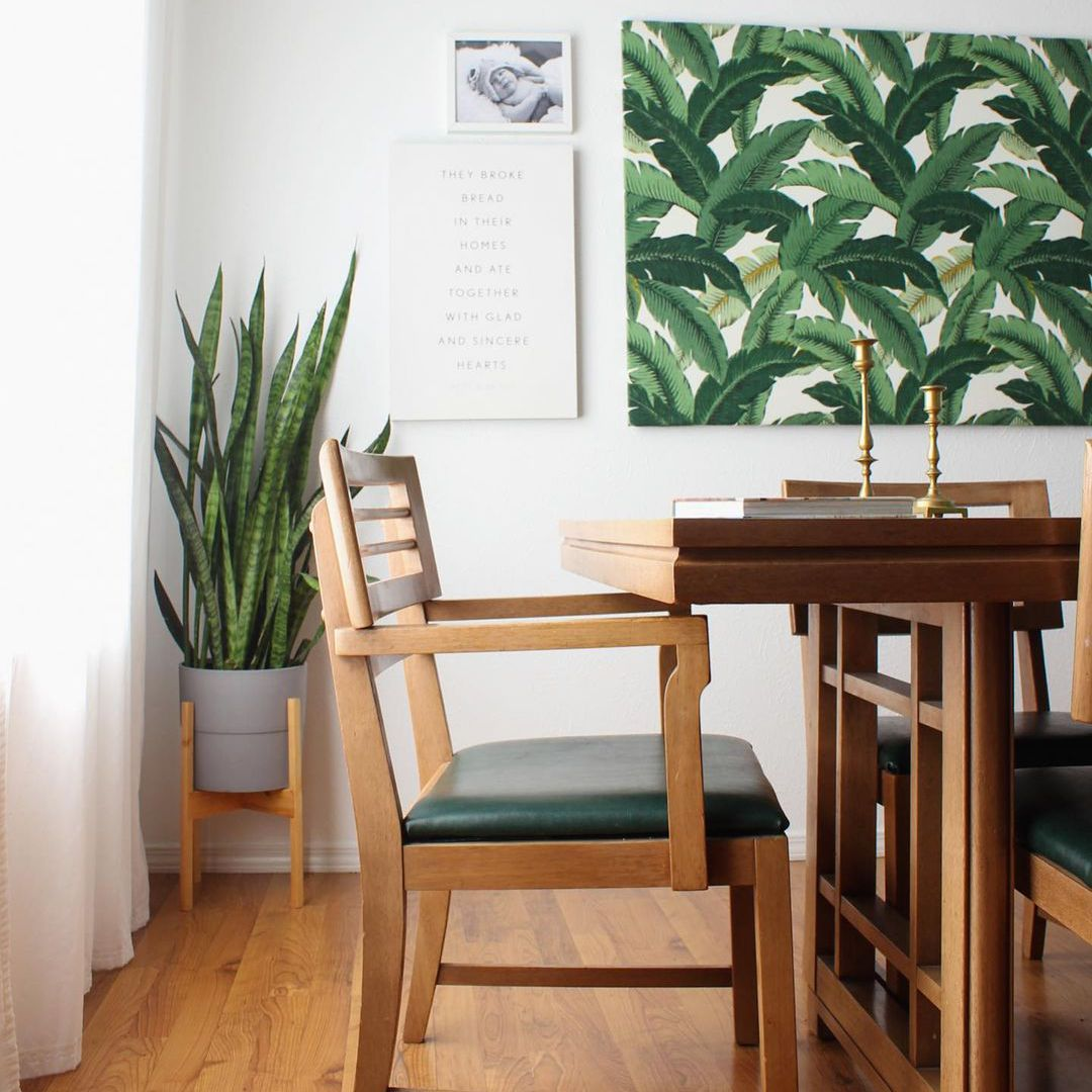 Snake plant in a corner