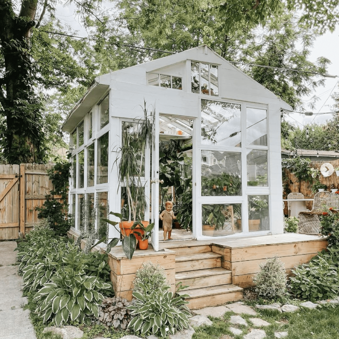 Beautiful lush greenhouse surrounded by hosta plants.