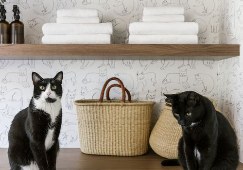 houseplants safe for cats