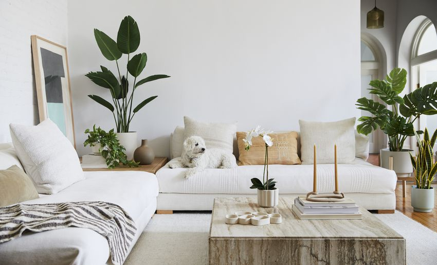 white living room with plants