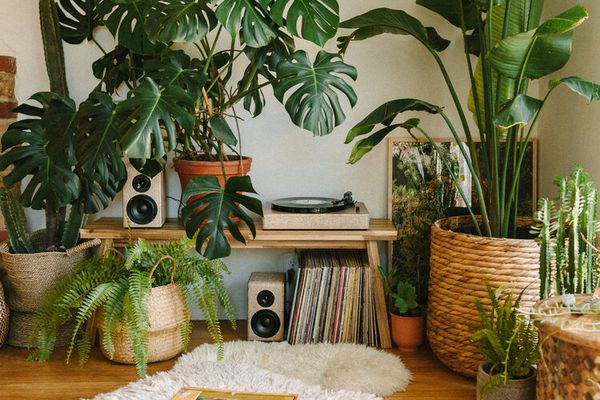 boho chic interior with banana tree plant and monstera plant, baskets, and record player