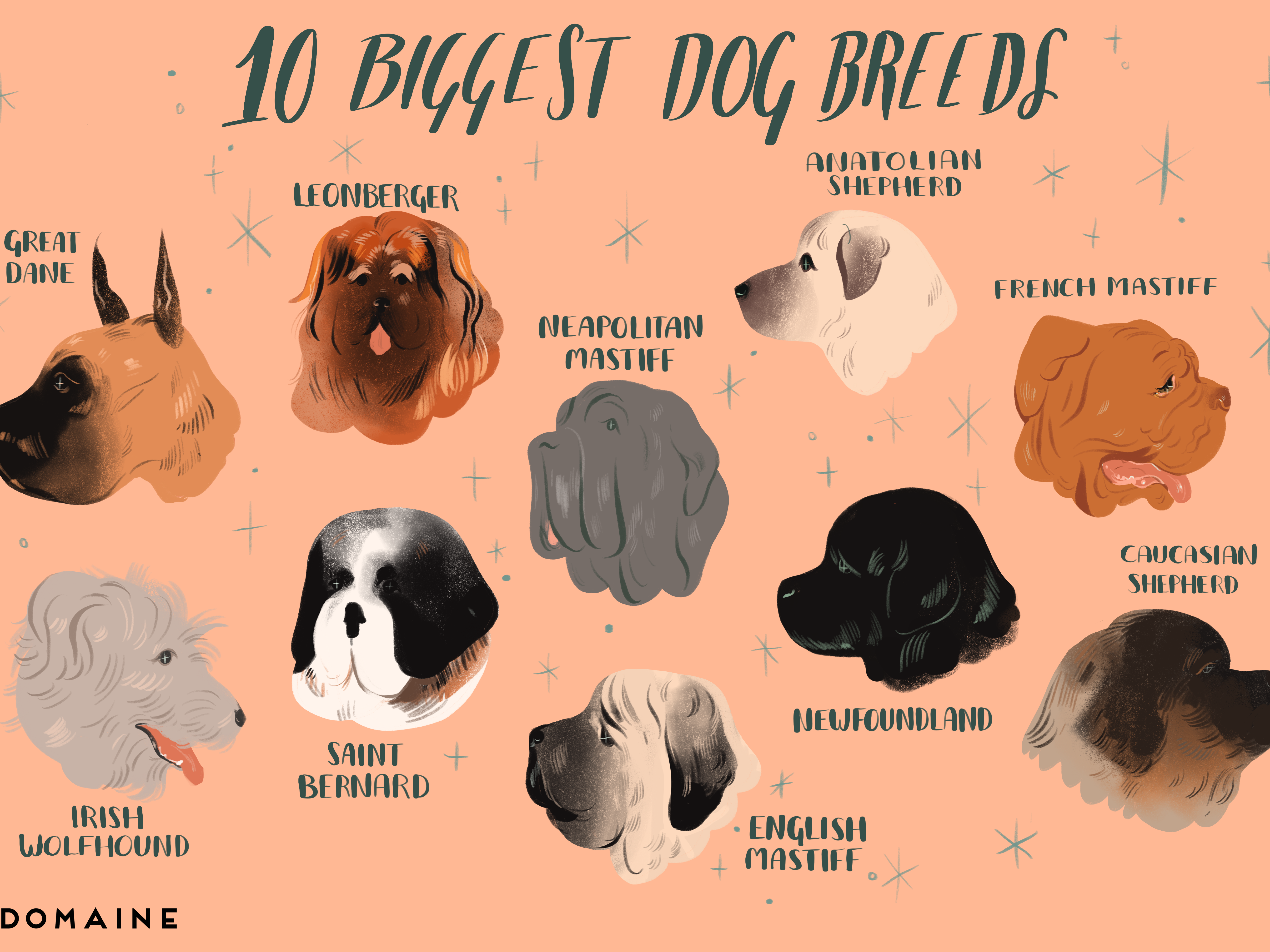 The 10 Biggest Dog Breeds in the World