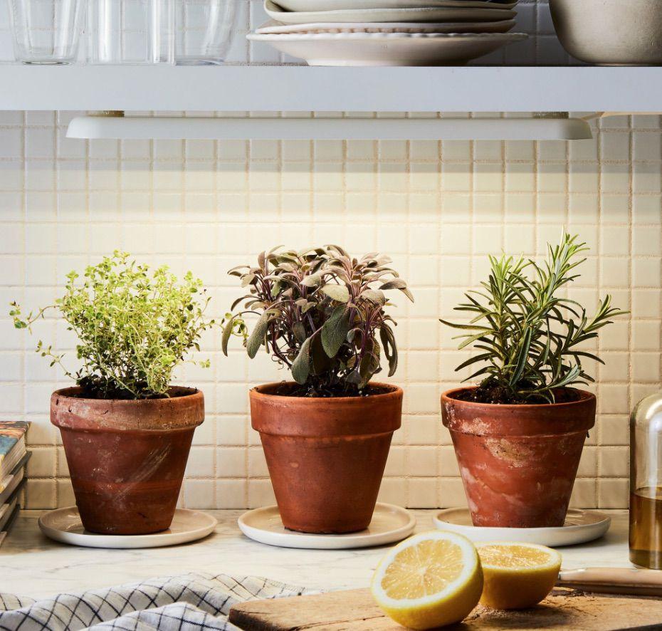 Grow-Anywhere Growbar LED Light & Hydroplanter