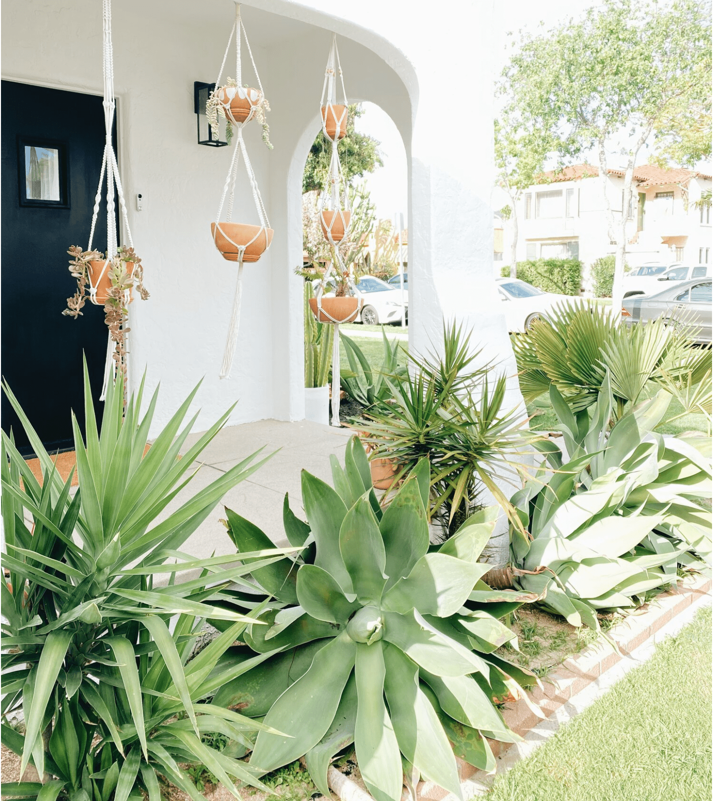desert planters