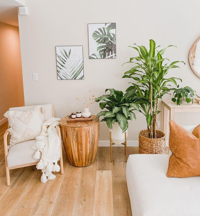 Corn plant and Chinese evergreen in a living room