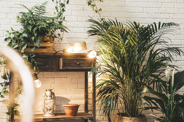 Indoor palm tree growing in pot with tropical plants