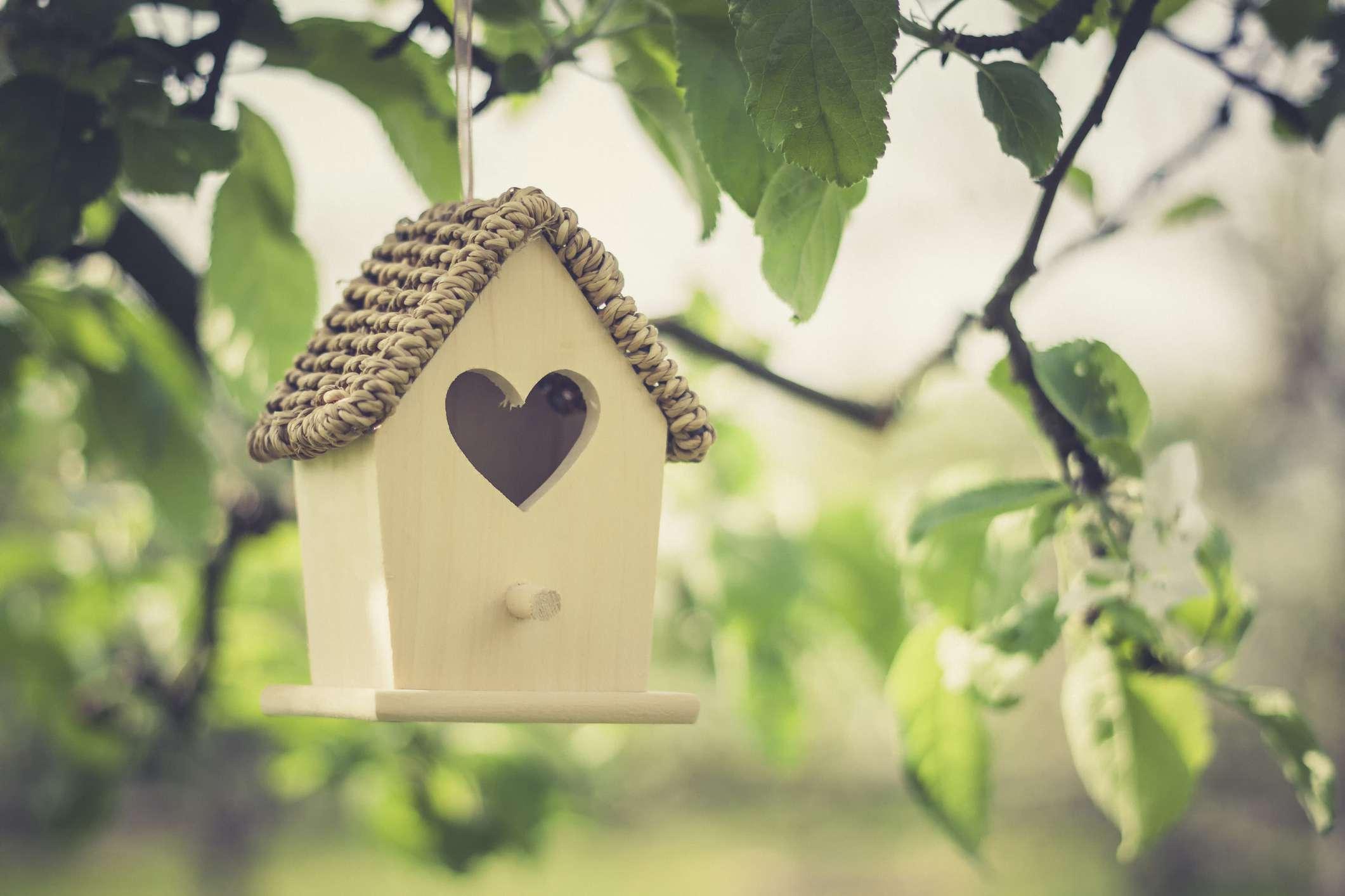 Birdhouse hangs from apple tree