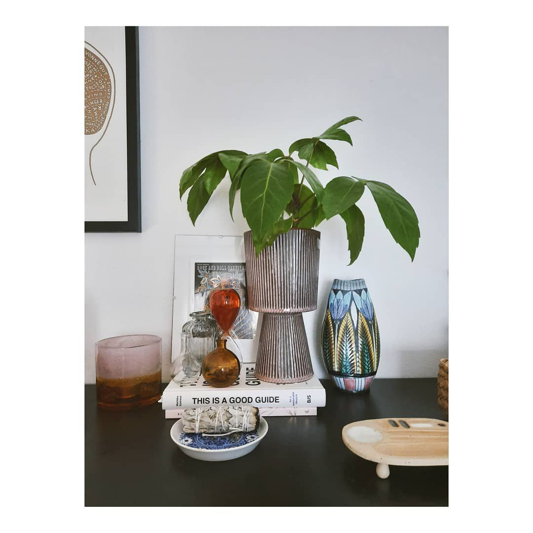 Coffee Plant Care Growing Guide