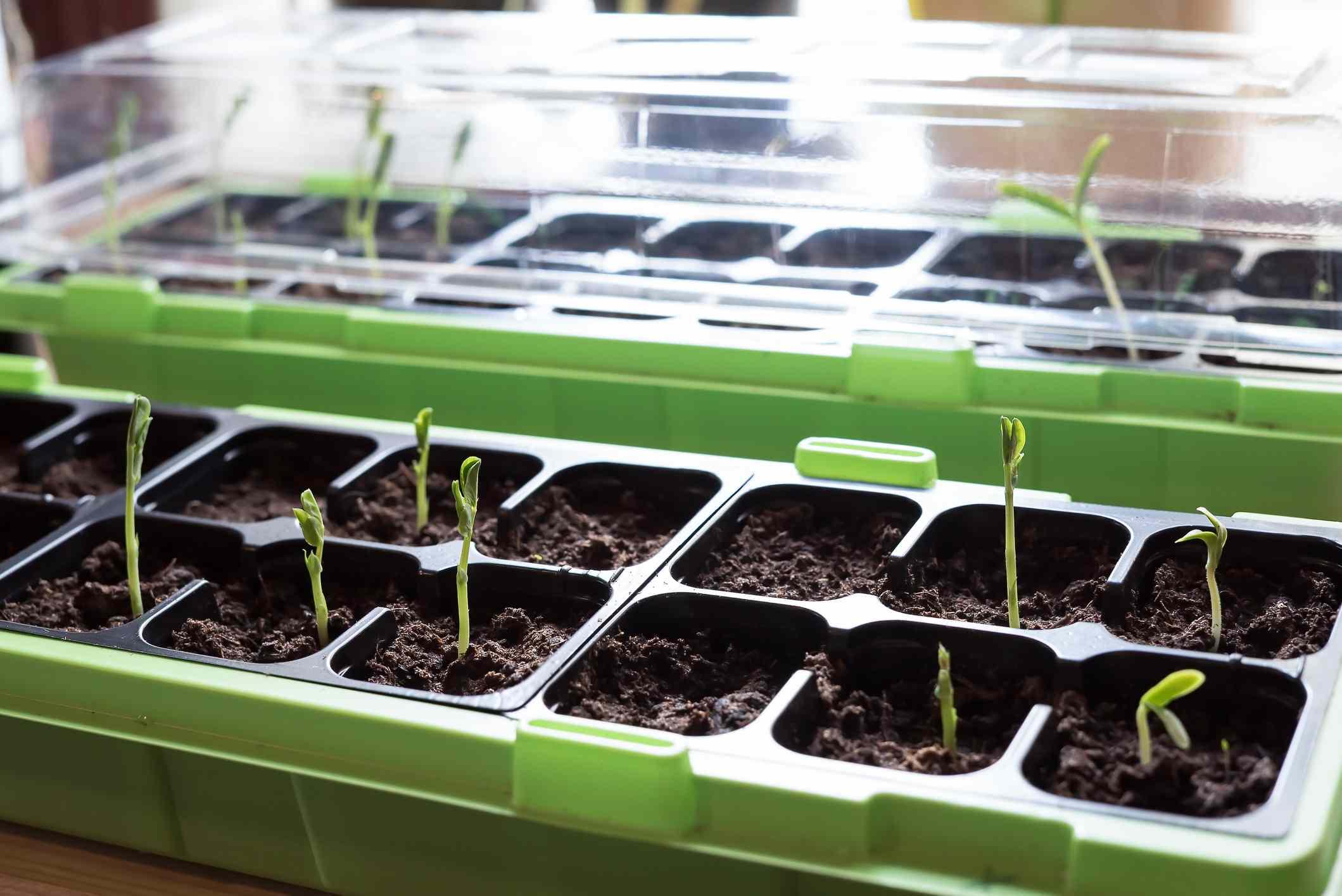 seedling tray materials