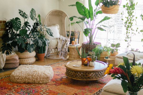Living area with plants