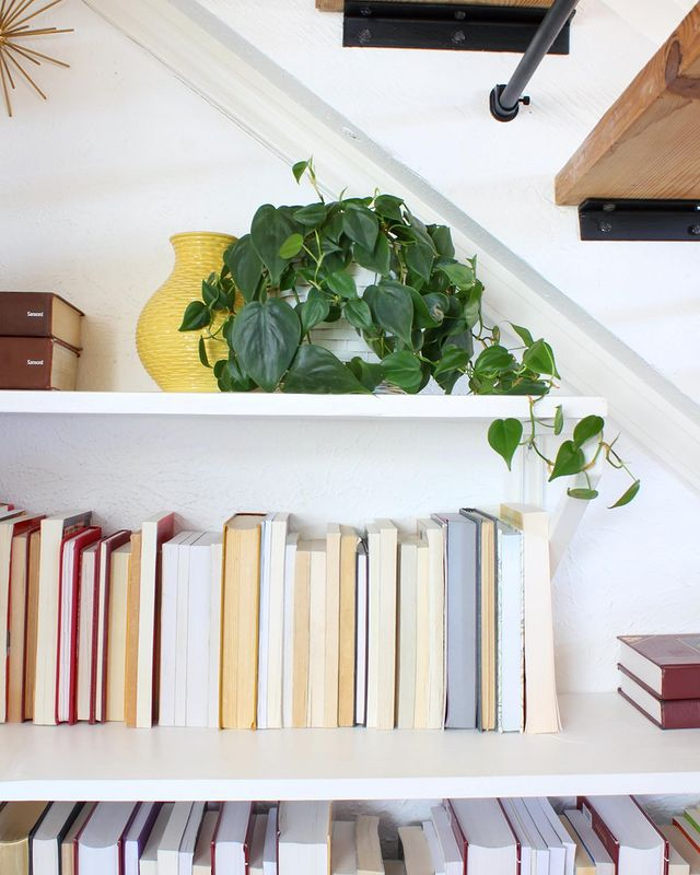 Philodendron on a bookshelf