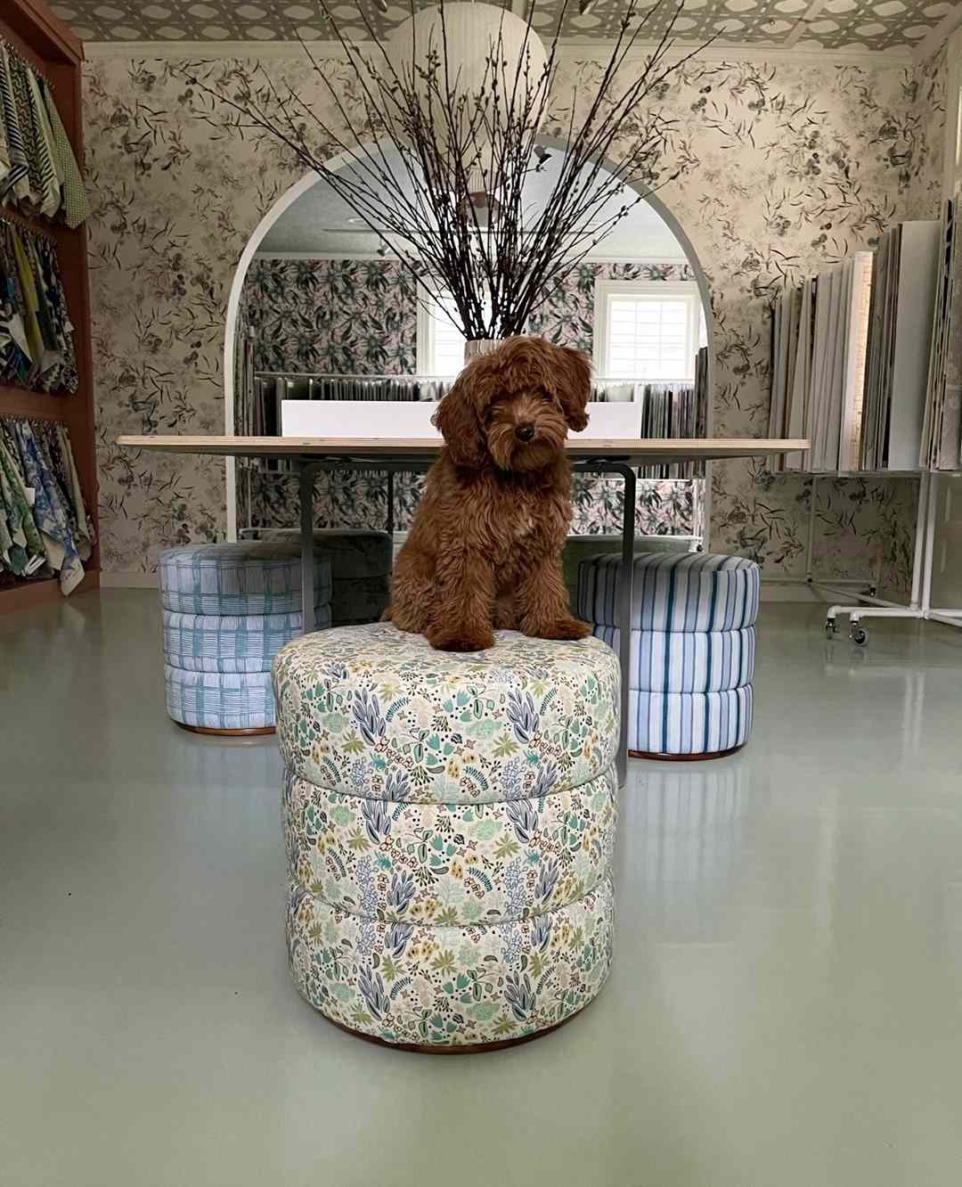 Cute brown dog on patterned ottoman.