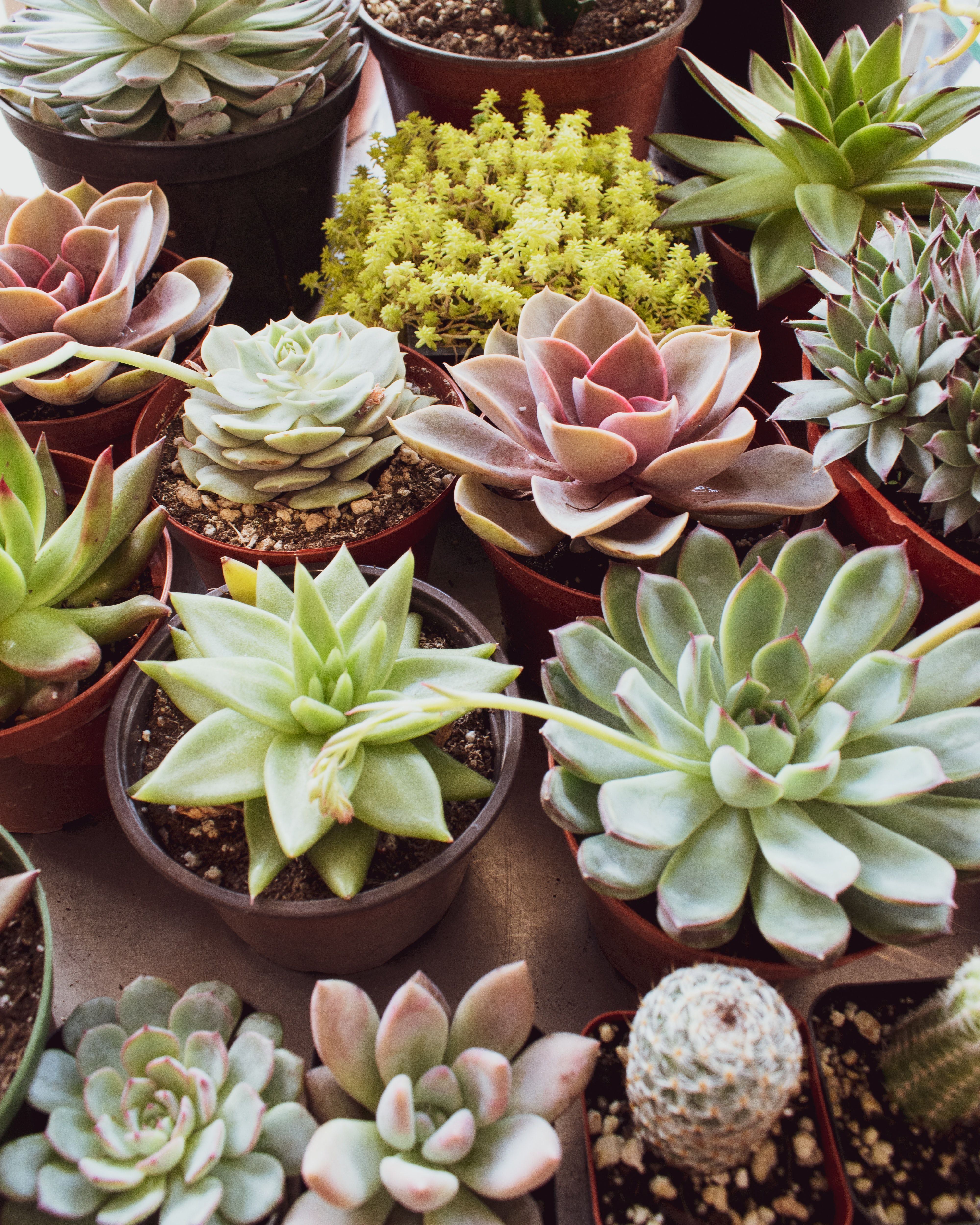 14 Colorful Houseplants That Will Brighten Up Your Home