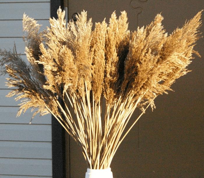 Art Finds Boutique Extra Large Pampas Grass, 15 Pieces