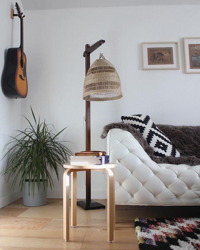 Madagascar dragon tree in a living room corner