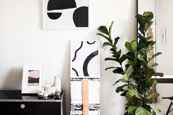 5 Biggest Mistakes Made When Caring for a Fiddle Leaf Fig