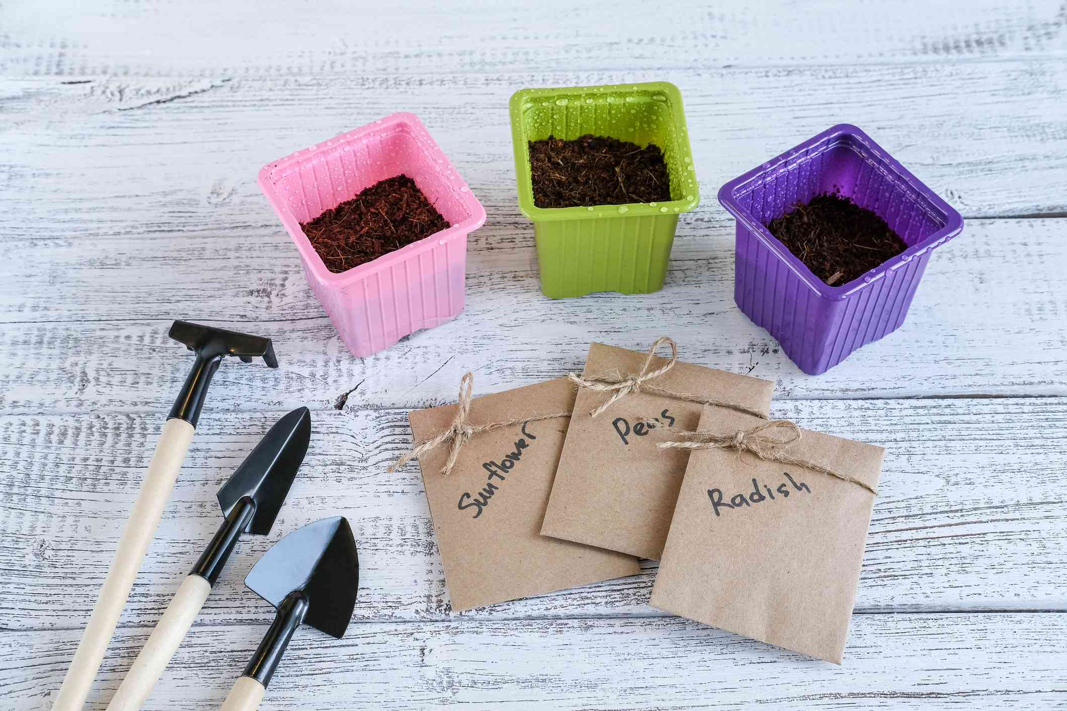 preparing microgreen containers