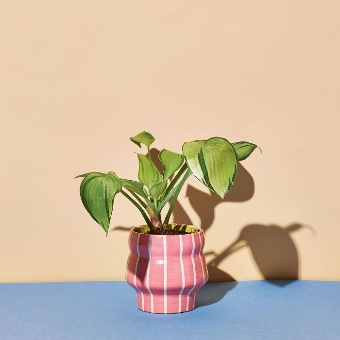 15 Low-Light Indoor Plants That Actually Crave Dark Corners on indoor shade house plants, indoor snake plant, indoor green plant name,