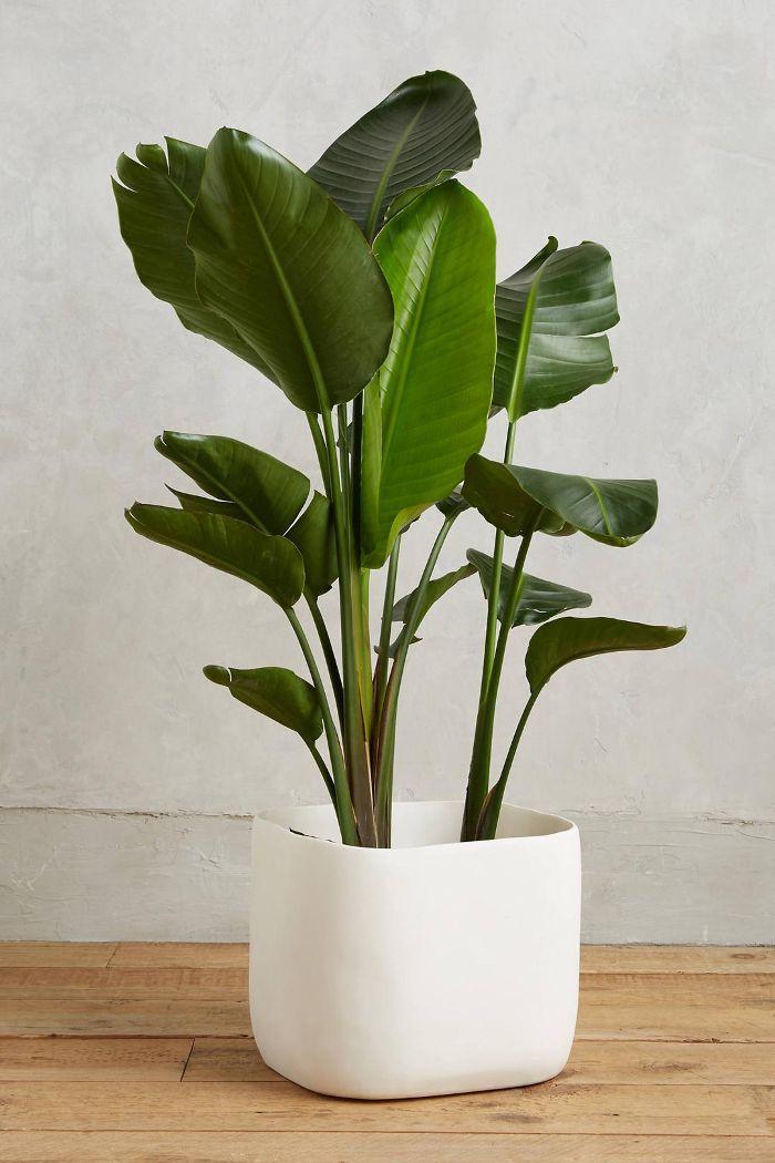 Sculpted Planter
