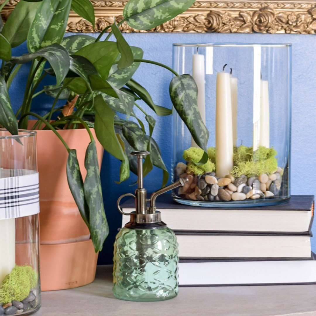 indoor plants safe for cats: prayer plant