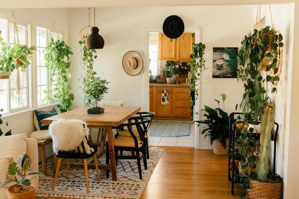 dining room with white walls and wood floor and several green hanging plants from ceiling