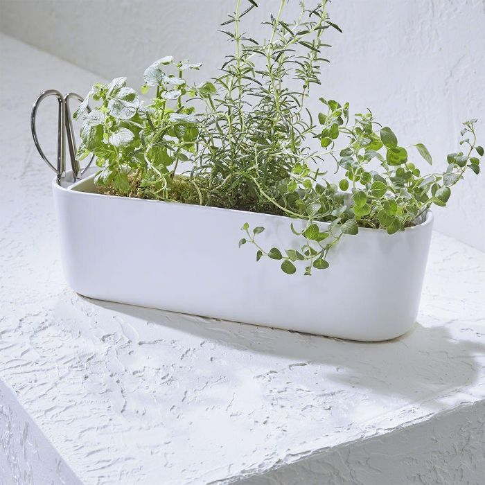 Herb Planter with Scissors - Crate and Barrel