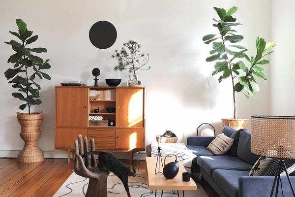 iving room plants