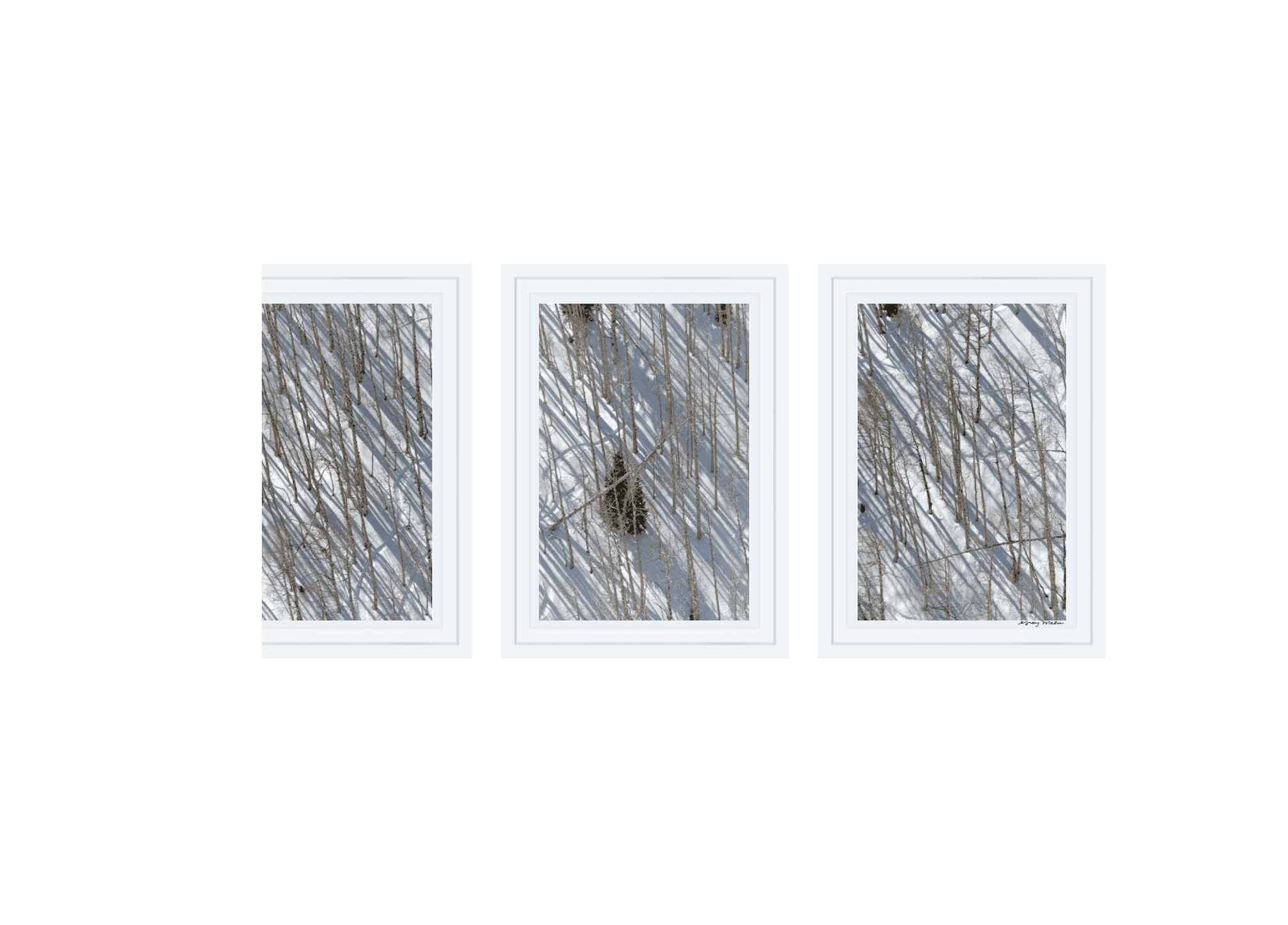 Sundance Birch Trees Triptych
