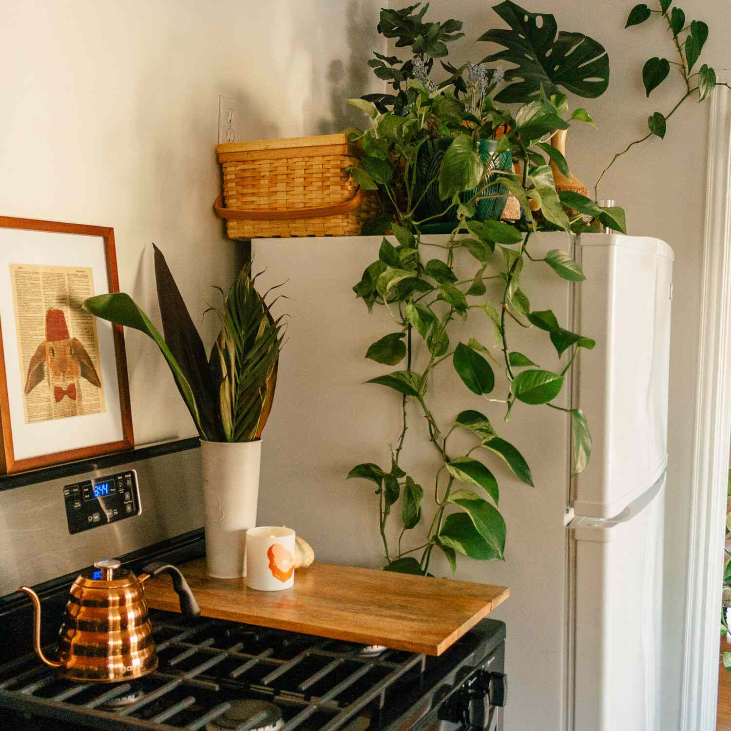cheap plants philodendron
