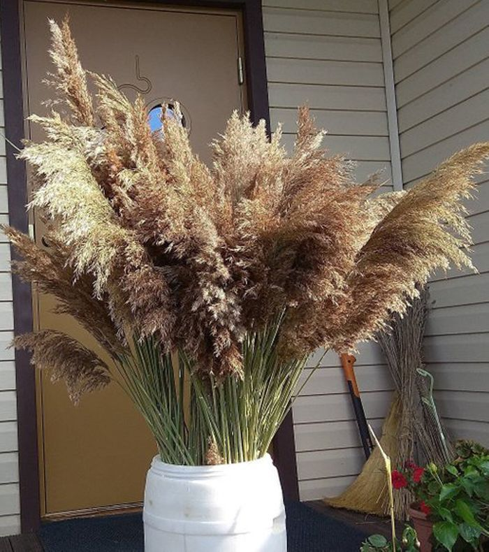 Art Finds Boutique Extra Large Pampas Grass