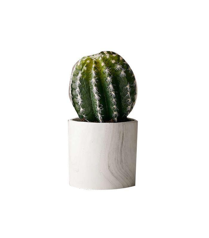 Small Cactus Decor